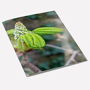 Tree Buds Notebook
