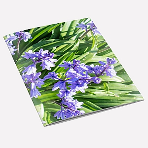 view Bluebells Notebook details