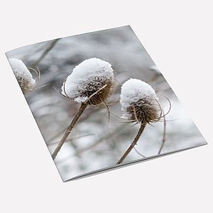 view Snow Teasel A6 Notebook details